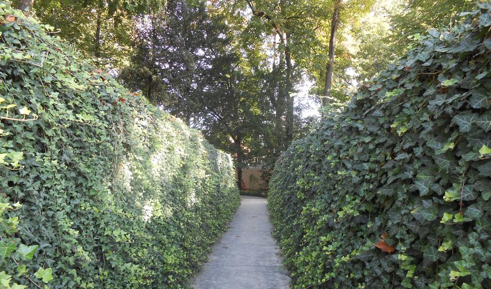 Barriere vegetali realizzate da Il Germoglio