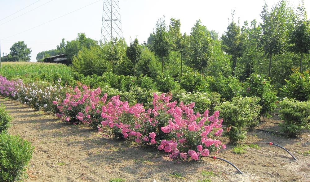 Piante in fiore presso il vivaio de Il Germoglio