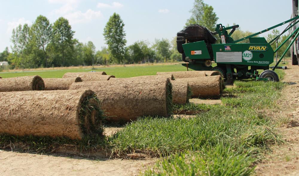 Produzione tappeto erboso in zolla