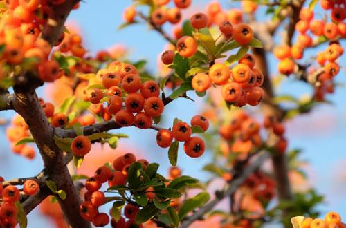 Piante da giardino il germoglio - Piante e alberi da giardino ...