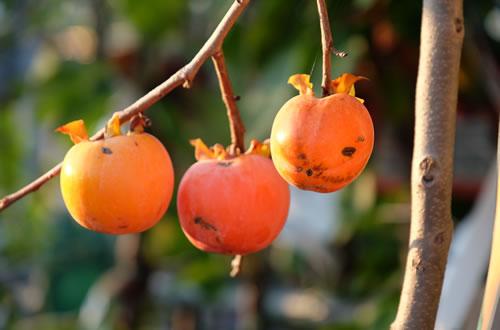 Piante da giardino il germoglio for Piante da frutto
