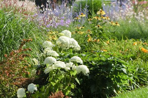 Piante da giardino il germoglio - Piante invernali da giardino ...