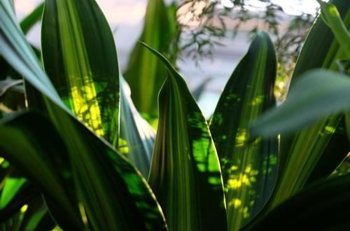 Piante da interno il germoglio - Piante verdi interno ...