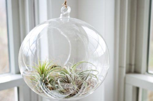 Come proteggere le piante in inverno thumb