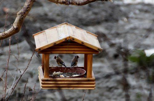 Come alimentare gli uccellini selvatici thumb