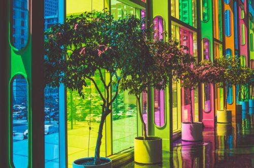 Le piante depurano l'aria delle nostre case! thumb