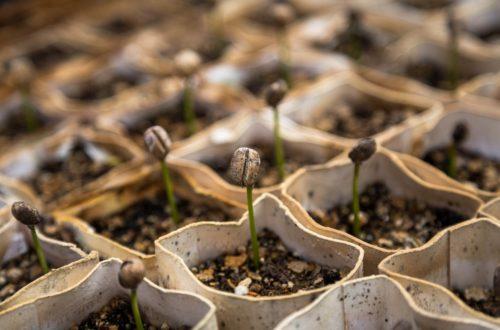 Come effettuare la semina in semenzaio: 10 consigli utili thumb