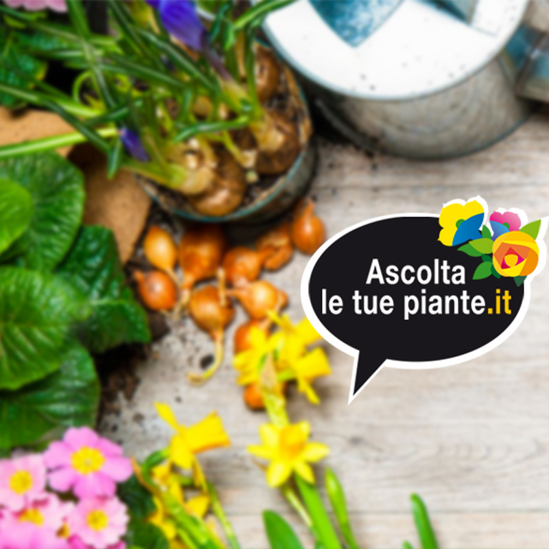 Ascolta le tue piante – 23 giugno 2018 Cover