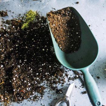 A scuola di giardinaggio – settembre 2018 thumb