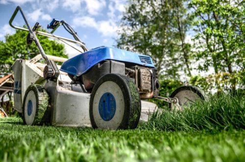 Cura del prato: 10 consigli utili per coltivare un bel tappeto erbosothumb