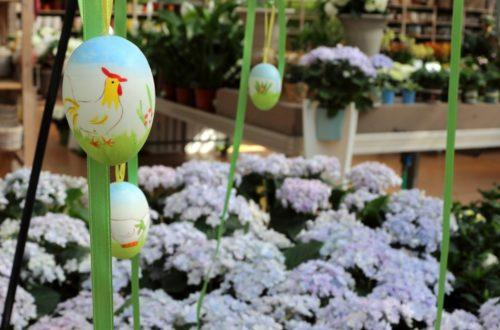 Le fioriture primaverili del garden center! Guarda il video! thumb