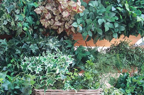foglie verdi thumb