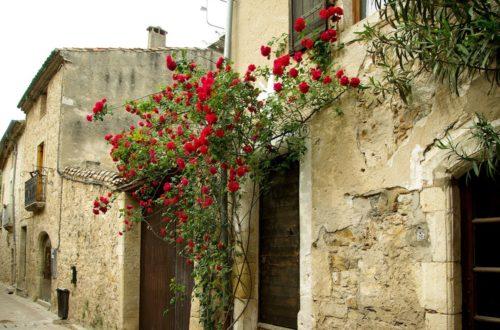 Coltivare le Rose: 10 consigli del nostro esperto! thumb