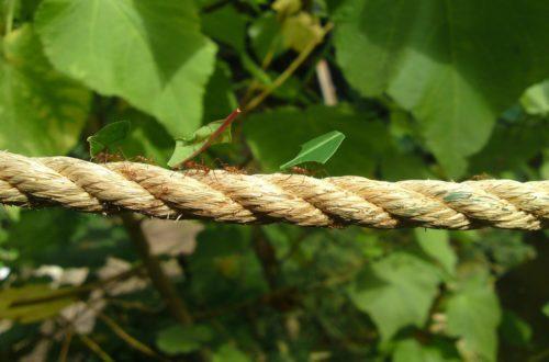 Come eliminare le formiche dalla casa: prevenzione e rimedi thumb