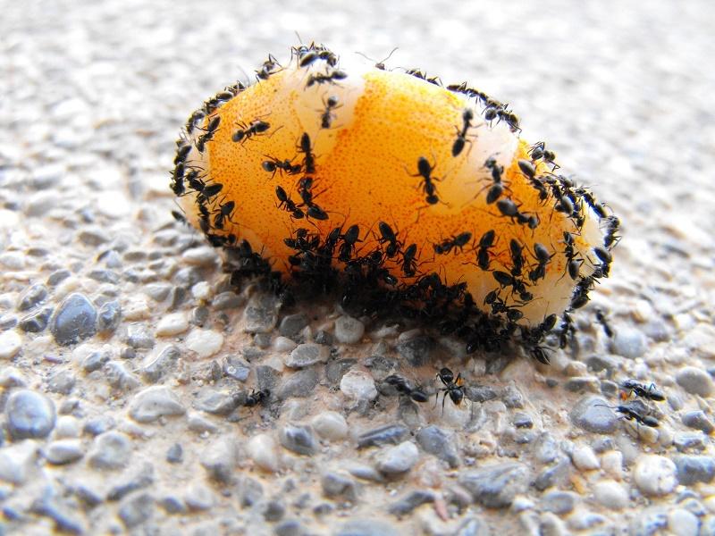 Come Eliminare Le Formiche Dalla Casa Prevenzione E Rimedi Il