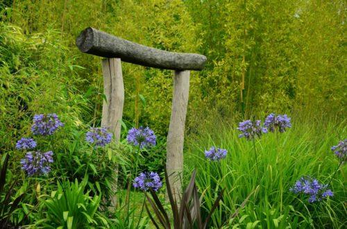 Come coltivare gli Agapanthus: il fascino dei fiori blu indaco thumb
