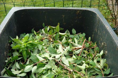 Come fare compostaggio domestico: pochi consigli per ottenere un compost ecologico e gratuito thumb