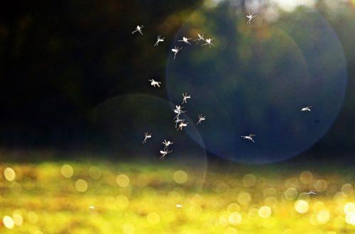 Come eliminare le zanzare dal giardino con la nebulizzazione thumb
