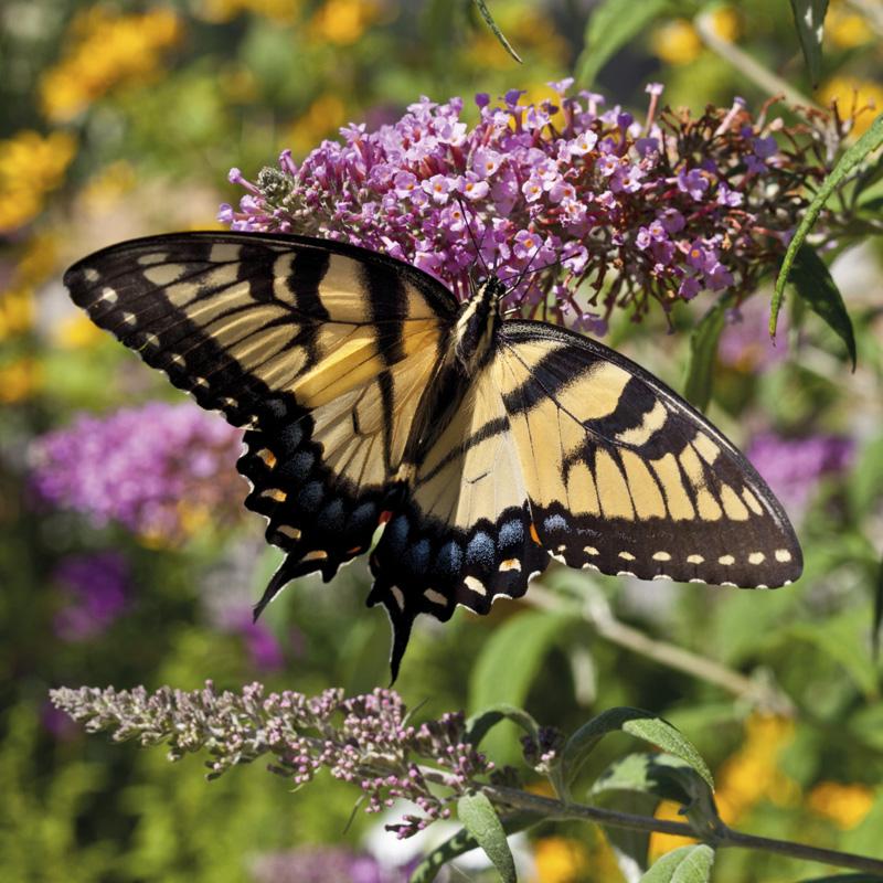Il giardino delle farfalle Cover