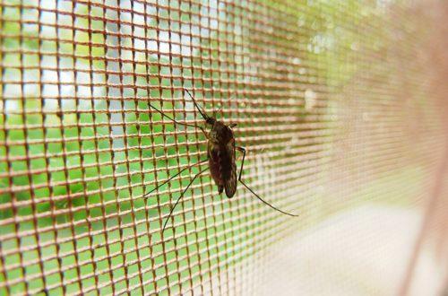 Proteggere i bambini dalle zanzare: attenzione ai neonati thumb