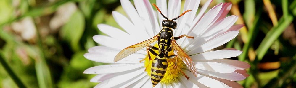 Come allontanare le vespe da casa blog di - Come allontanare le formiche da casa ...