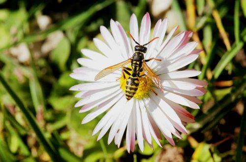 Come allontanare le vespe da casa thumb
