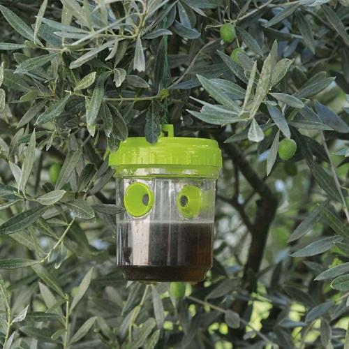 Come allontanare le blatte in casa - Informare Sicilia
