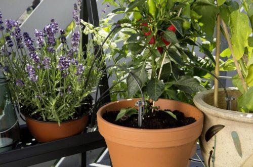 Come irrigare le piante quando siamo in vacanza: ecco tutte le soluzioni thumb