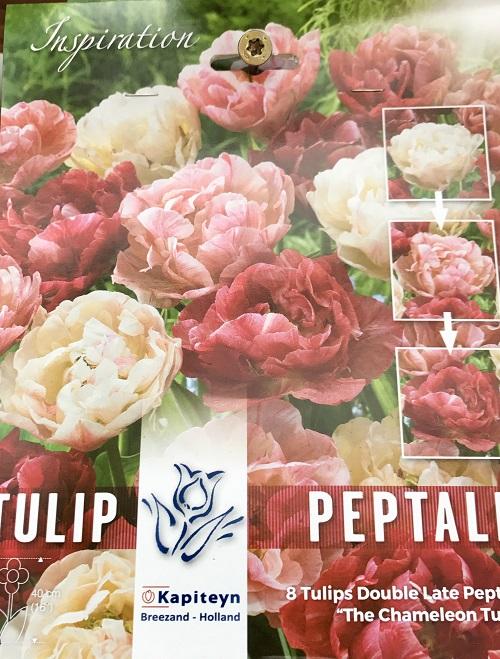 Come coltivare i bulbi autunnali il germoglio - Bulbi estivi quando piantarli ...