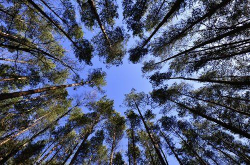 Il Bonus Verde entra nella Finanziaria: una buona notizia per gli amanti delle piante e per la salute di tutti thumb