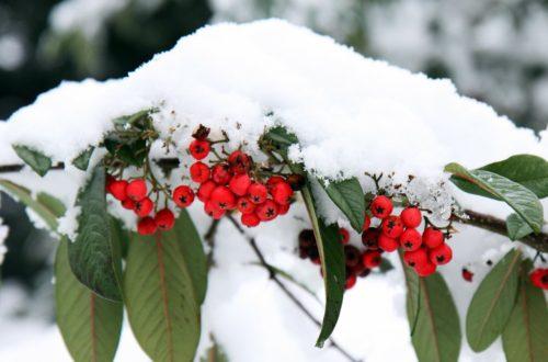 Il giardino in inverno: le piante adatte per i mesi più freddi thumb