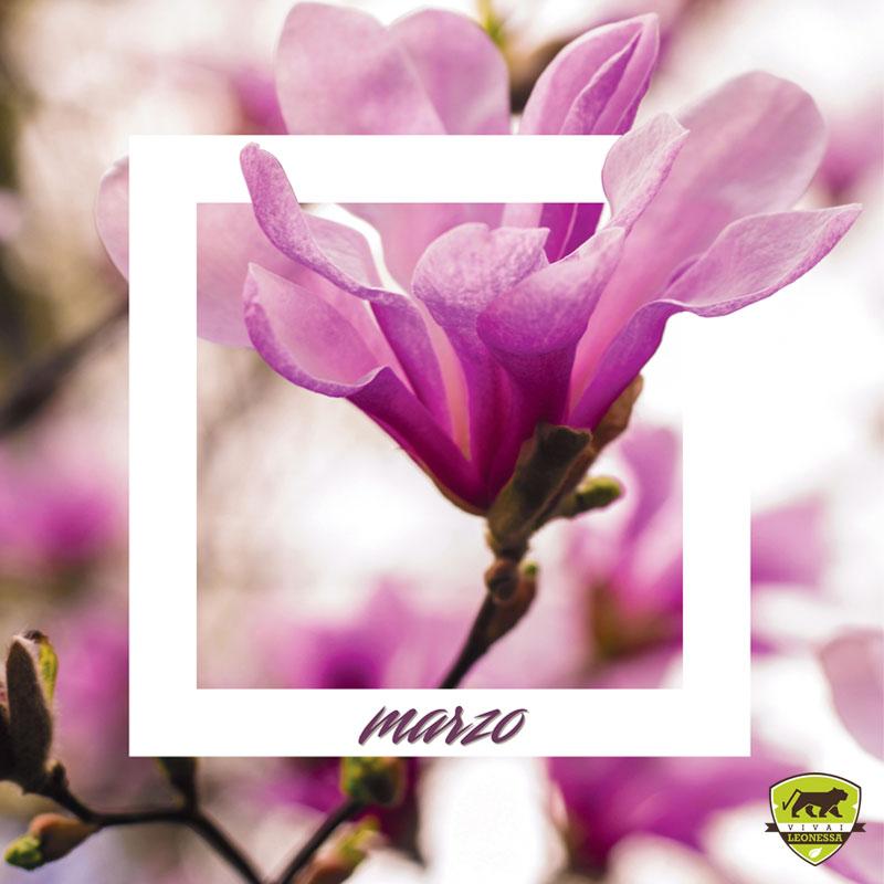 #Piantonario di marzo: le piante da giardino del mese Cover