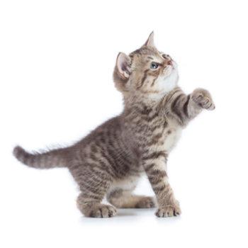 Mangimi e accessori per il gatto