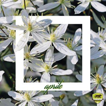 #Piantonario di aprile: le piante da giardino del mese thumb