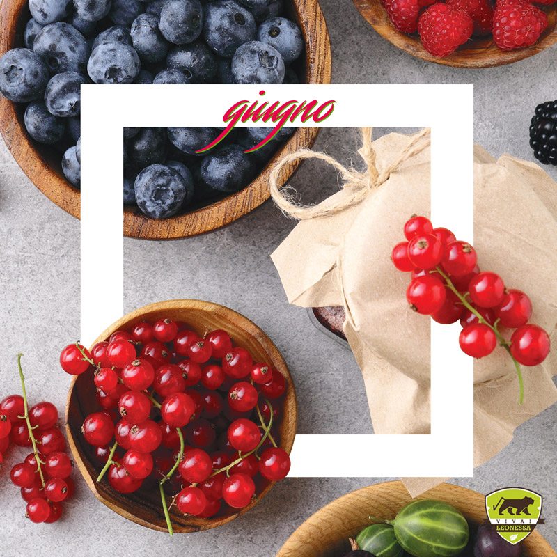 #Piantonario di giugno: le piante da giardino del mese Cover