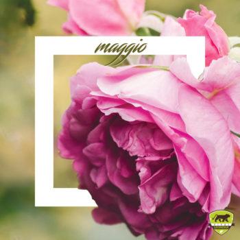#Piantonario di maggio: le piante da giardino del mese thumb