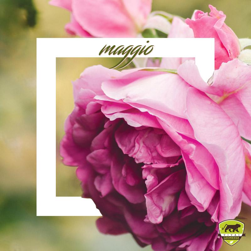 #Piantonario di maggio: le piante da giardino del mese Cover