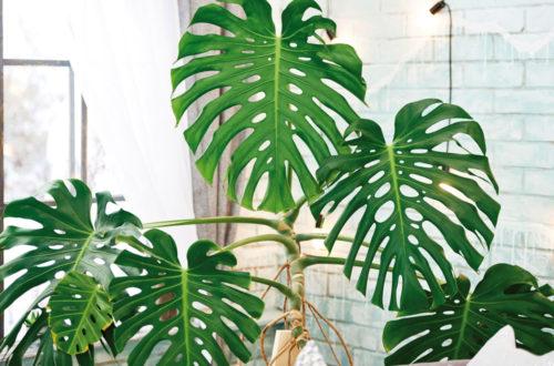 I tropici in casa thumb