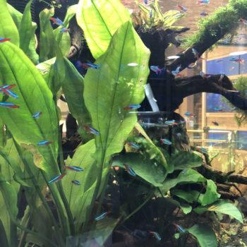Come allestire un acquario con piante? thumb