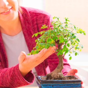 Tecnica bonsai – livello base thumb