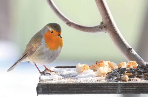Uccellini: cibo e casette per affrontare l'inverno! thumb