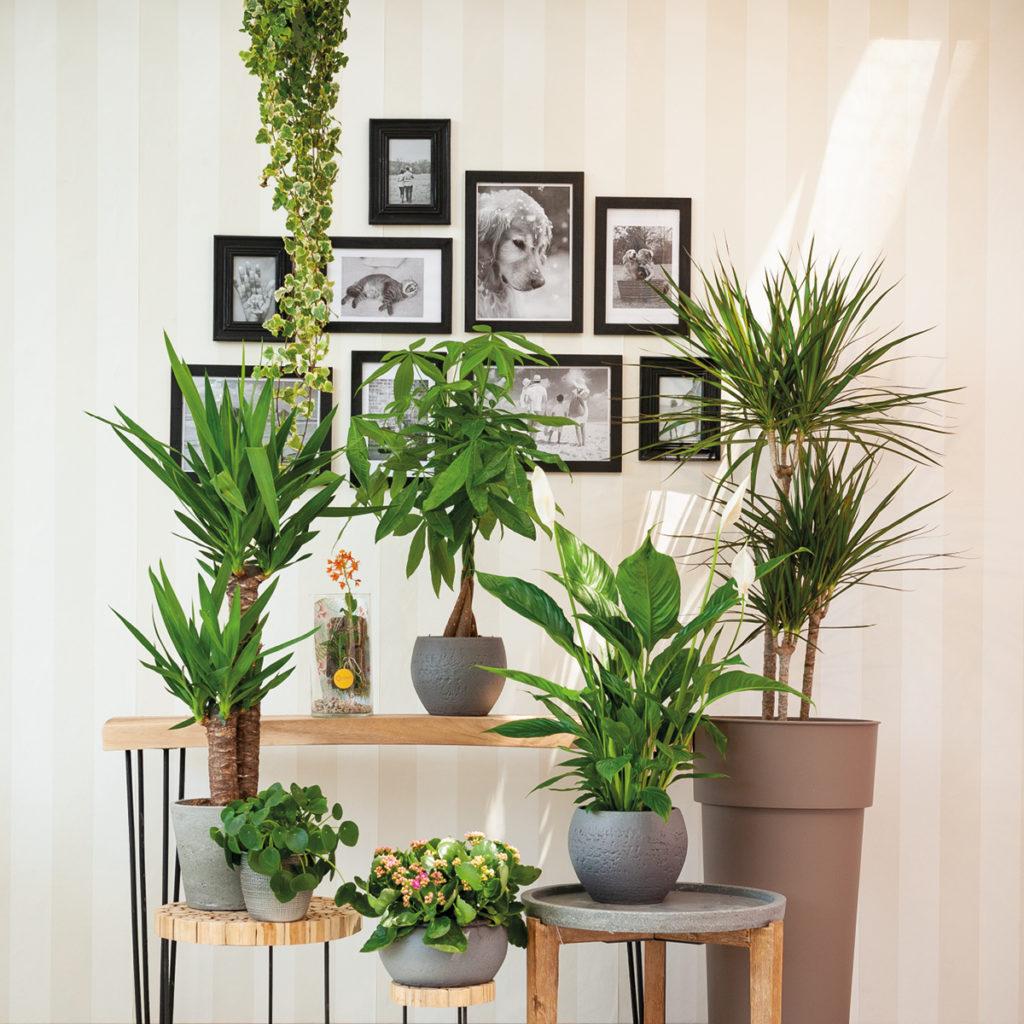 Piante Da Appartamento Design.Offerta Piante Da Interno Il Germoglio