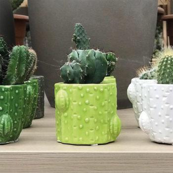 Cactus in vasetto di ceramica