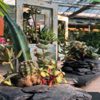 Composizioni di piante succulente con rocce vulcaniche