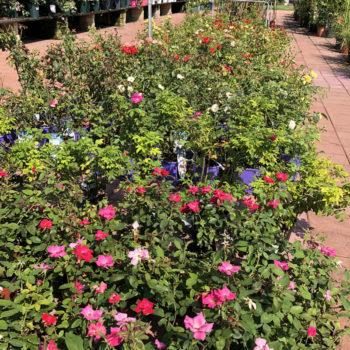 le offerte del garden center il germoglio