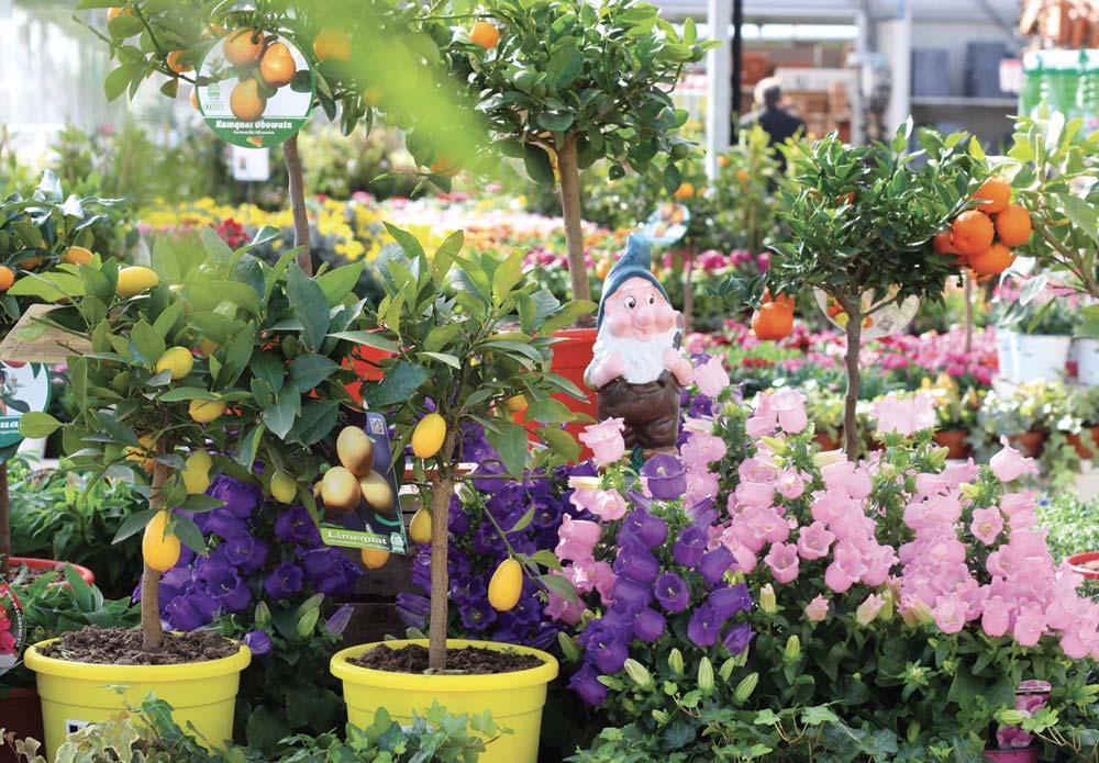 garden-center-germoglio