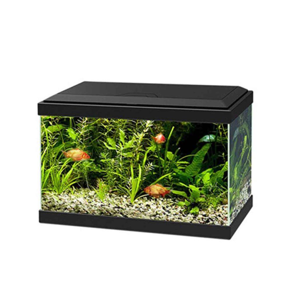 Acquario Askoll Aqua 20 light led Cover